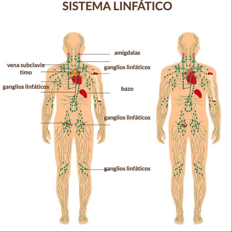 El ejercicio ayuda al drenaje linfático. ¿Por qué es tan importante?